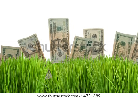 Twenty dollar bills growing in the green grass