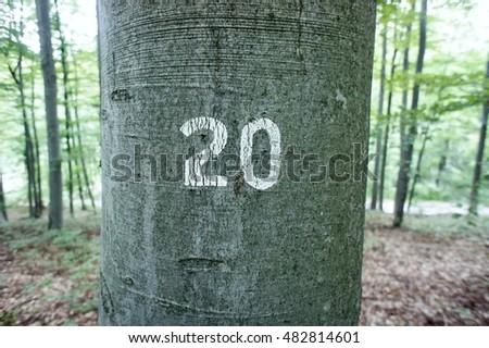 Twenty inscribed on a tree #482814601
