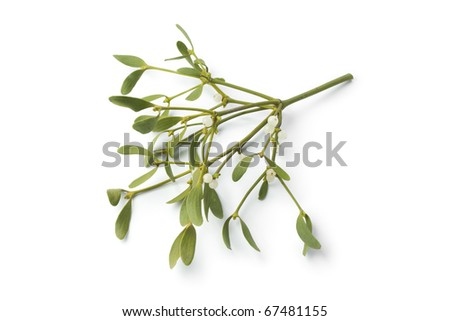 Twig of fresh mistletoe isolated on white background