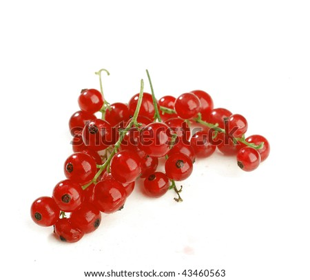 twig of juicy red currant isolated on white background