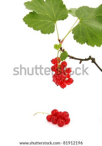 twig of red currant on white