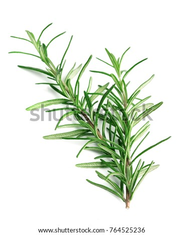 Twig of rosemary on a white background. #764525236