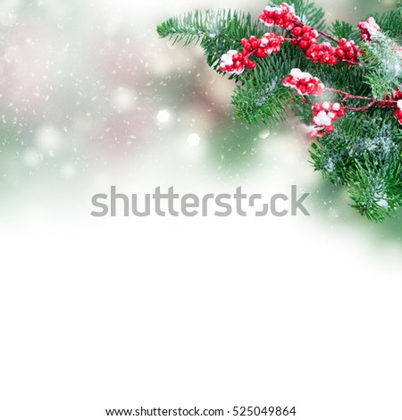 twig with red berries and green evergreen tree twig over white background #525049864