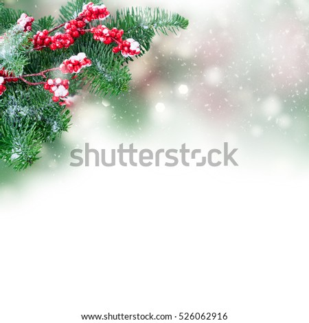 twig with red berries and green evergreen tree twig  over white background #526062916
