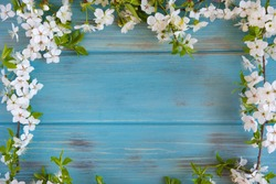 Twigs of a blossoming cherry tree on a blue wooden background. View from above. Spring background for the banner. Frame for greeting card with spring flowers.