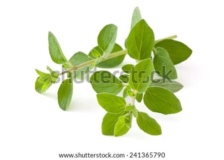 Twigs of oregano. Isolated on white background. #241365790
