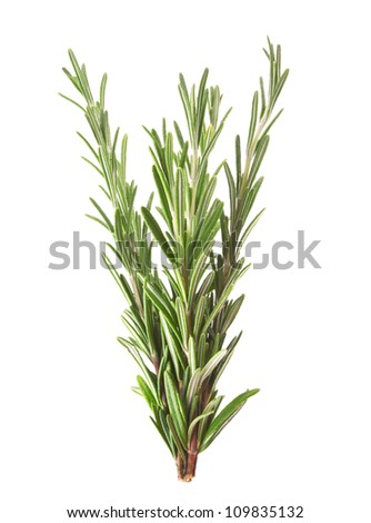 Twigs of rosemary isolated on white background