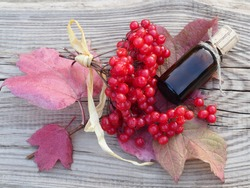 Twigs of the viburnum opulus shrub with red berries and tincture in a glass bottle on a wooden table top view. Medicinal plant european cranberry bush for the preparation of vitamin drinks