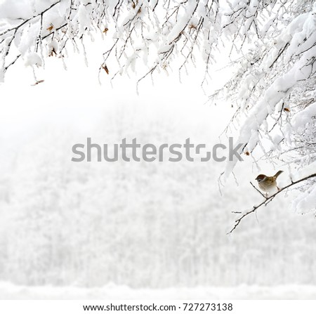 Twigs of tree covered of hoarfrost and snow on background of winter forest in snow.  There is a sparrow on one of the sprigs #727273138
