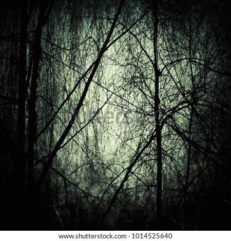 Stock Photo Twilight in the dark forest, mystic spooky nightscape