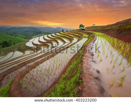 Twilight on rice fields for rice terraces in mountain