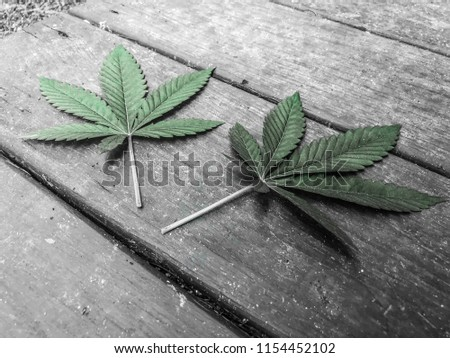 Twin marijuana leafs #1154452102
