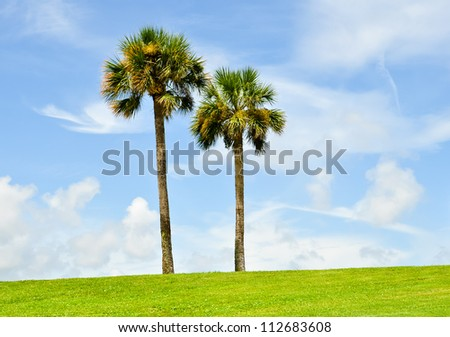 twin palmtrees in a lush meadow against the blue sky