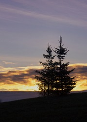 Twin Pines Sunset. A silhouette of 2 pine tree on a hill with sunset background.