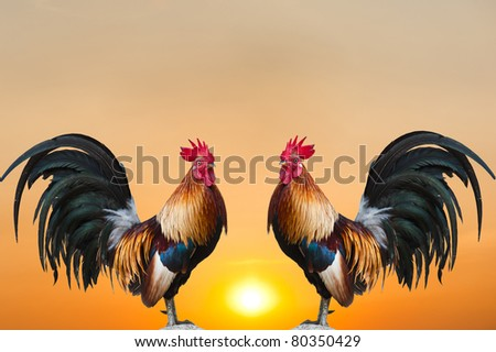 Twin  Roosters on Sunrise