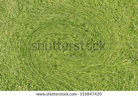 Twirl green grass in the meadow #310847420