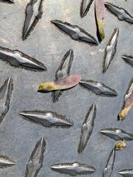 Twirling silver maple seed pod