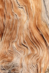 twisted and contorted distressed wood grain background texture