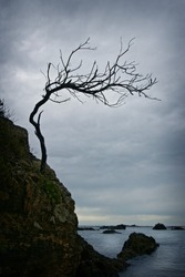 Twisted bare branched tree on a rocky cliff shore with storm clouds and ocean in the background