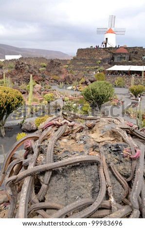 Twisted cactus plant in tropical park - stock photo