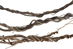 Twisted jungle vines collection, liana plant isolated on white background, clipping path included.