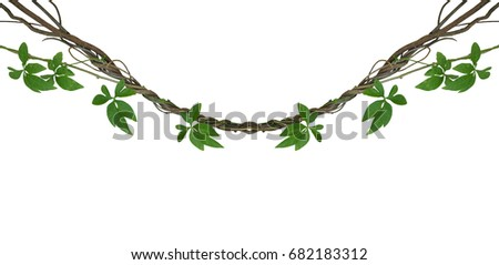 Twisted jungle vines with green leaves of wild morning glory liana plant isolated on white background, clipping path included. #682183312