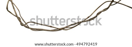 Twisted wild liana vine isolated on white background, clipping path included