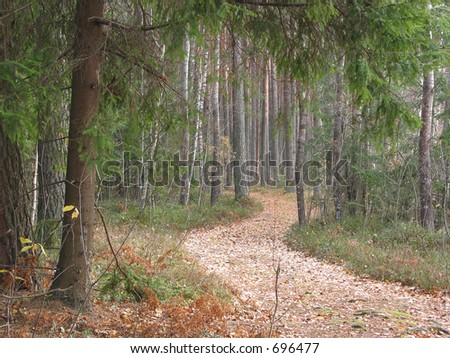 Twisting path in the autumn forest