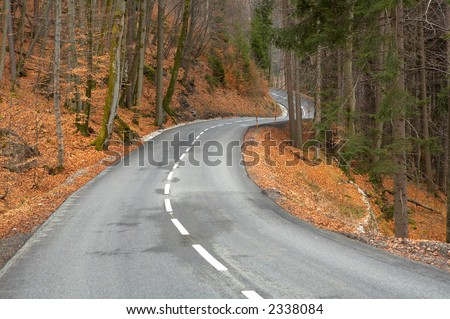 twisting road to a wood