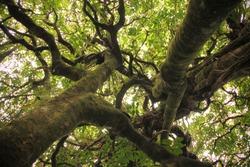 Twisting Tree Trunks