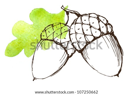 Two acorns on a white background
