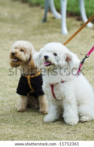 Two adorable dogs sitting in lawn side by side