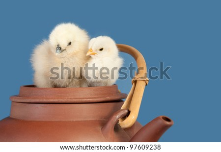Two adorable Easter chicks snuggling on top of a ceramic tea pot
