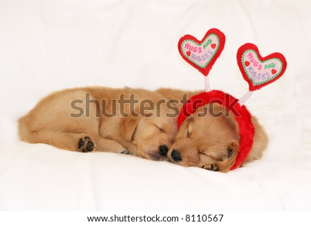 two adorable golden retriever puppies sleeping; one with headband with heart antennae