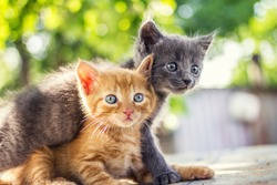 Two adorable kittens playing together.Kittens outdoor.