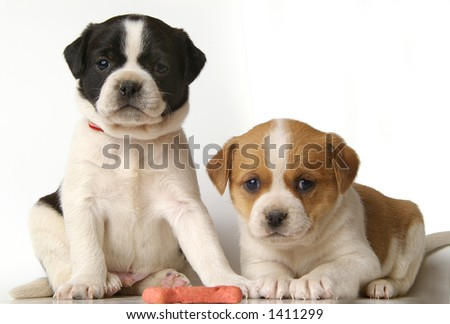 Two adorable puppies with very serious expressions.