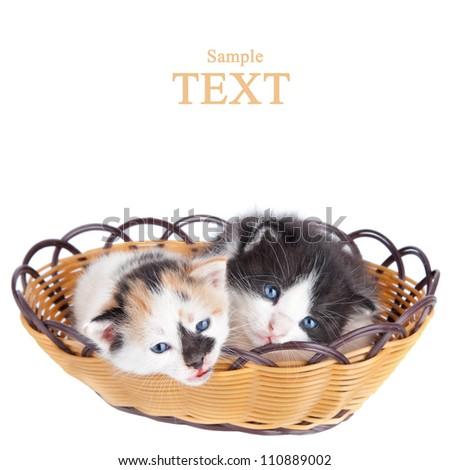 Two adorable small kitten in  wooden basket isolated over white