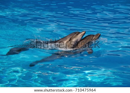 Two afalina dolphins #710475964