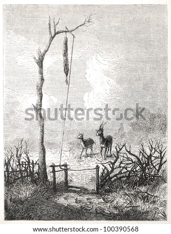 "Two antelopes in front of an antelope trap, drawn by J. Vanione in Emil Holub's ""Seven Years in South Africa"", published in Vienna, 1881"