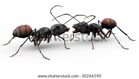 Two ants meeting for the first time, or conversing with each other on the day's work and productivity.