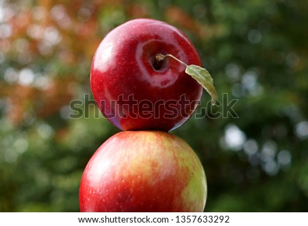 Two apples on top of in a beautiful autumn bokeh background #1357633292
