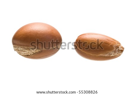 two argan fruits on a white background