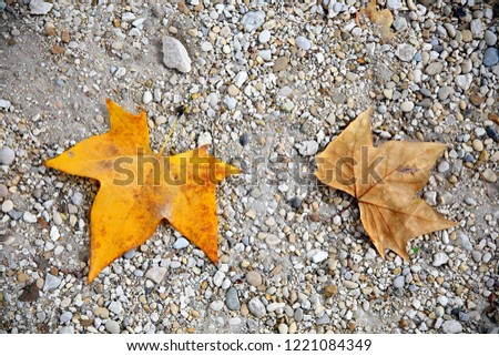 Two autumn colored fall leaves on gravel #1221084349