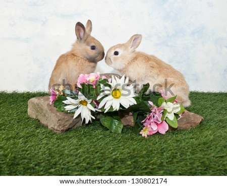 Two baby bunnies friends sitting on a rock looking at one another, with spring flowers around them.
