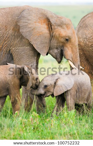 Two baby elephants playing in the grass, Masai Mara, Kenya