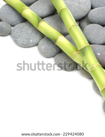 Two bamboo grove on gray stones #229424080