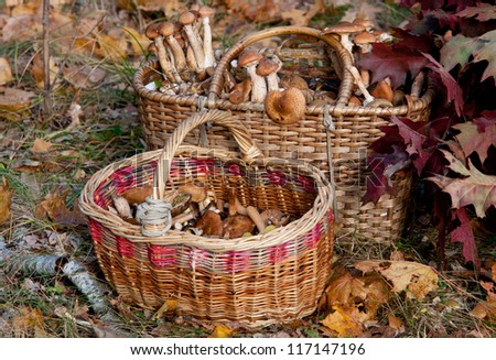 two baskets of mushrooms in autumn forest