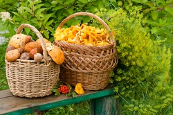 two baskets with mushrooms on the bench