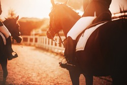 Two bay horses with riders in their saddles walk around the farm during the sunset, illuminated by the rays of the sun. Horse riding.