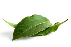 Two bay leaves isolated on white.